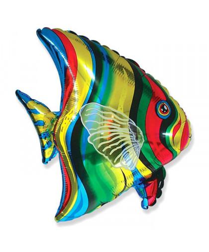 Рыба Тропическая